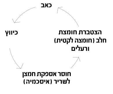 תהליך מעגל הכאב